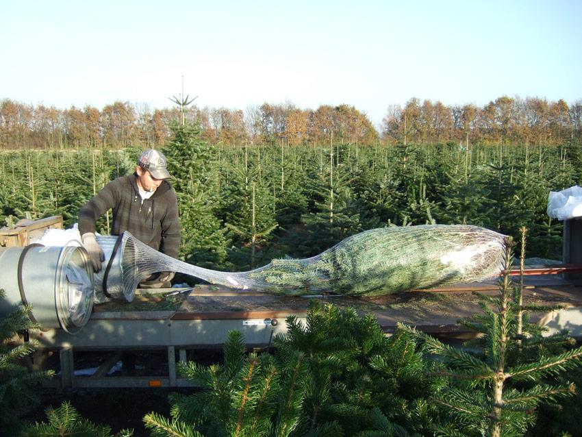 Vandenoever Kerstbomen