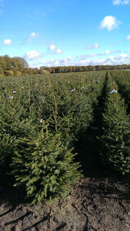 vandenoevervof-kerstbomen-verticaal01