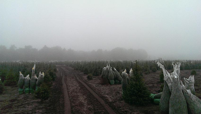 Vandenoevervof Kerstbomen