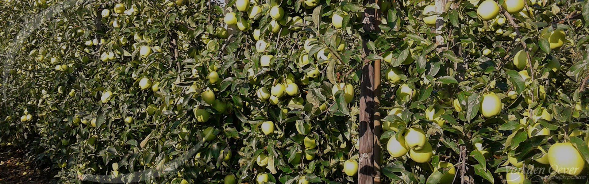 fruitbomen appels