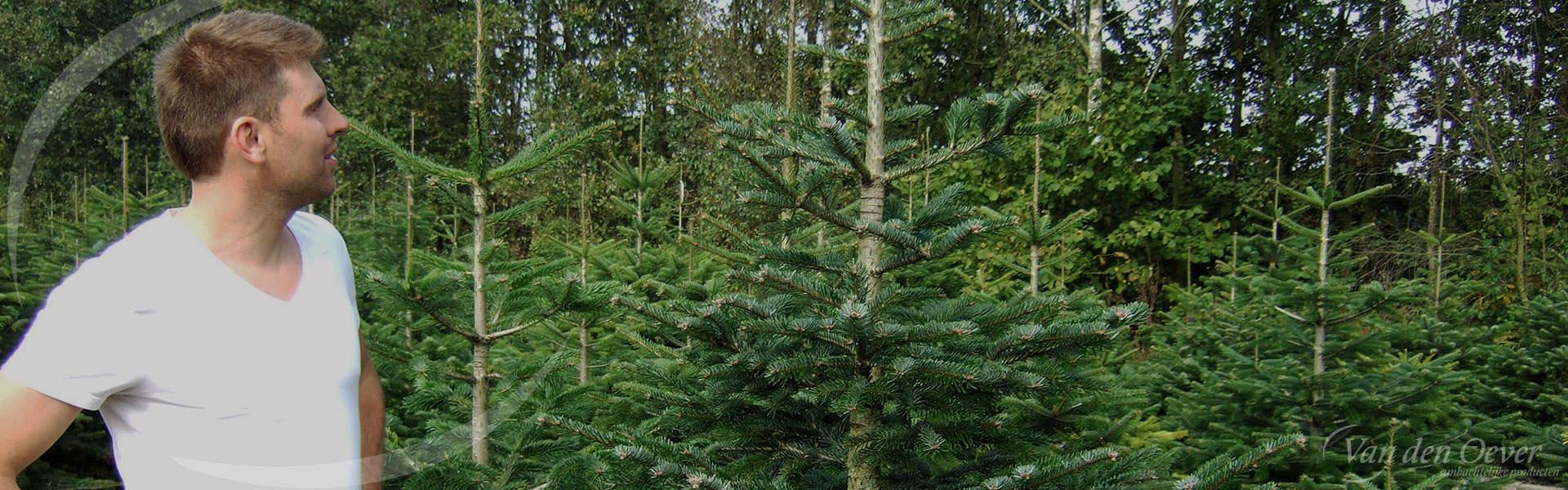 kerstbomen kwekerij mark van den oever